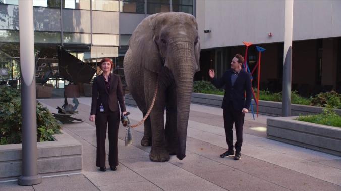 consider-the-elephant.jpg
