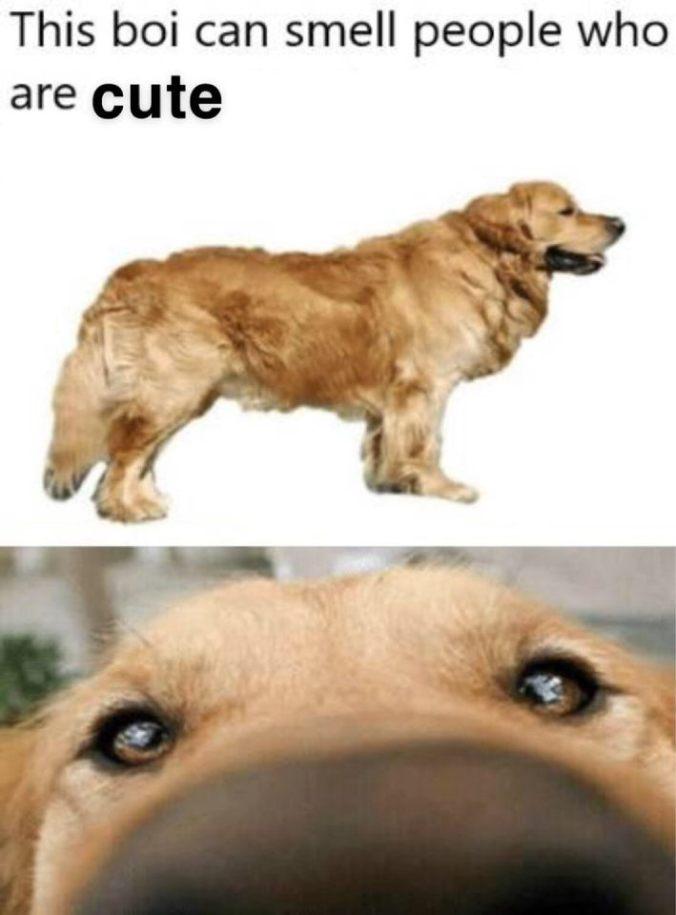dogMeme